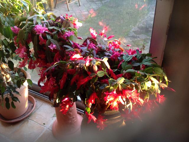Rayon fleuri