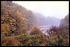 Budshead Creek
