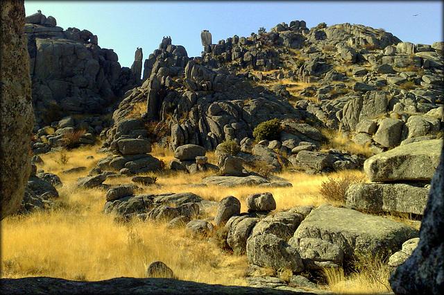 Sierra de La Cabrera. Griffon vultures on every outcrop