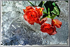 Roses on the rocks. ©UdoSm