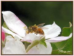Bonne journée pour les abeilles , Good day for the honeybees