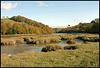 autumn down the creek