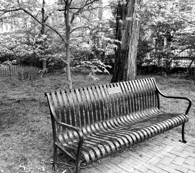 SH31 A Park Bench