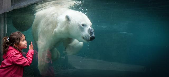 Chiara and the polar bear