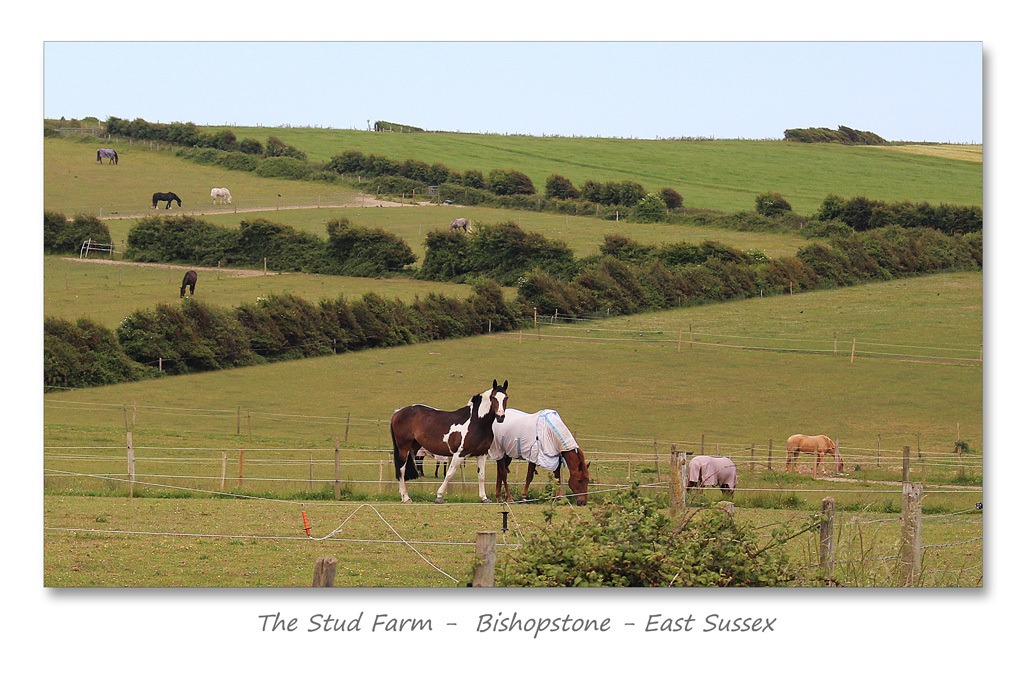 The Stud Farm - Bishopstone - Sussex - 15.6.2015