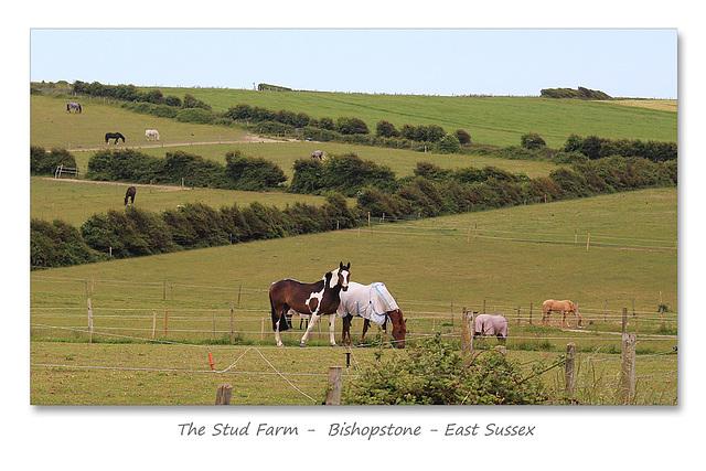 The Stud Farm - Bishopstone - Sussex - 15.6.2015