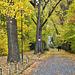 Herbstliche Schilderallee - Autumn avenue with traffic signs - HFF