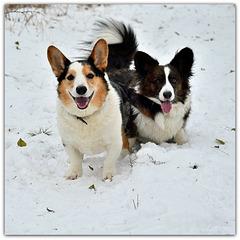 Snow = Happy Dogs;-)))