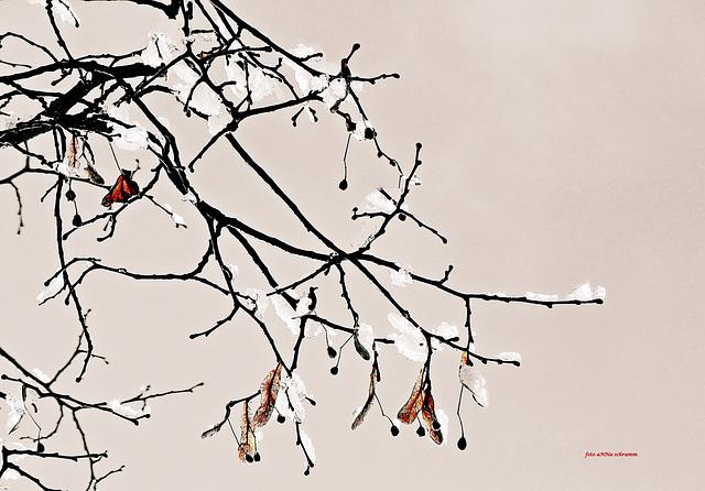 Winter solitude ...