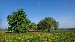 Höhepunkt des Frühlings