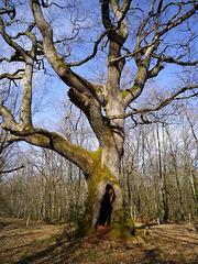 l'arbre des maitres sonneurs le 25 mars 2011