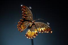 Papillon capturé en plein vol .