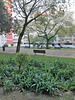 A small garden between Benfica's blocks