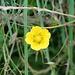 Unbekannte gelbe Blüte