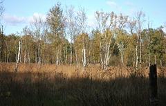 Herbst im Wittmoor