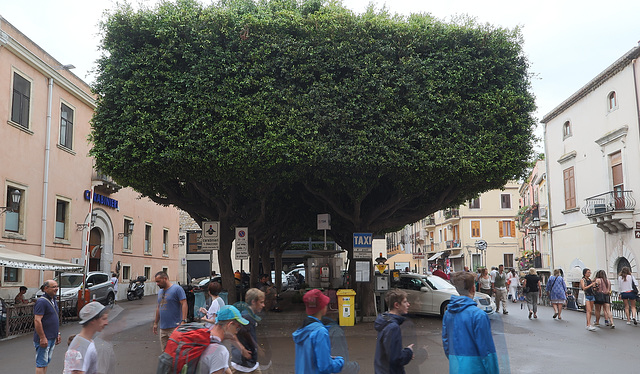 Piazza Vittorio Emanuele with an enormous hedge