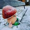 311 First snow