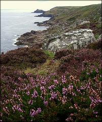 Zennor Coast, granite and heather.