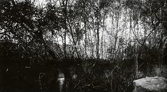 Willow Creek Pinhole