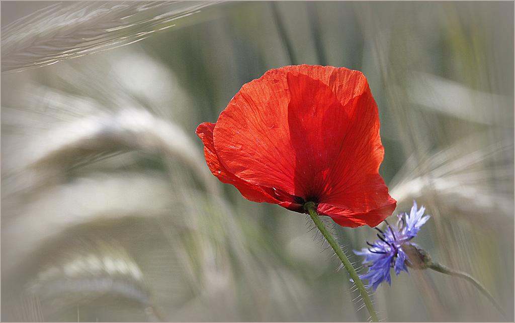 Une fleur par jour.... - Page 6 38815646.10679cbf.1024