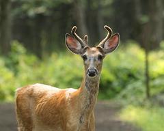 Oh! My deer!