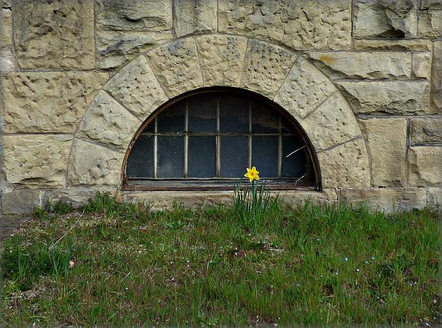 Blume vor dem Fenster