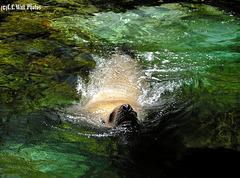 Aquarium Seal -- Wins by a Nose