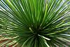 Spiky Green