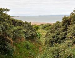 Scotland / Aberlady - Gullane Beach
