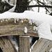 20210207 9910CPw [D~LIP] Wintereinbruch, Bad Salzuflen