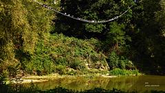 Taubenschaukel am Tiber (2 x PiP)