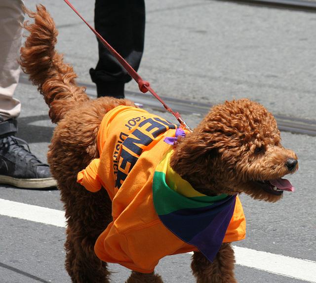 San Francisco Pride Parade 2015 (6893)