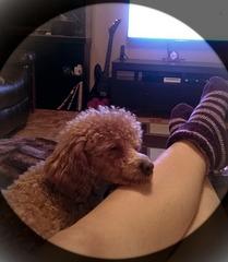 Après la marche elle dort sur ma jambe...