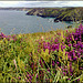 North Cliffs from Reskajeage Downs, Cornwall