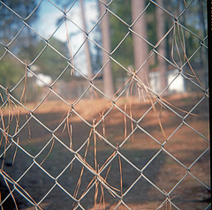 Fence with Pine Needles