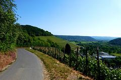 Auf dem Rotweinwanderweg