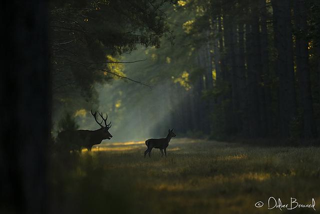 la traversée matinale
