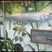 evolution of fish