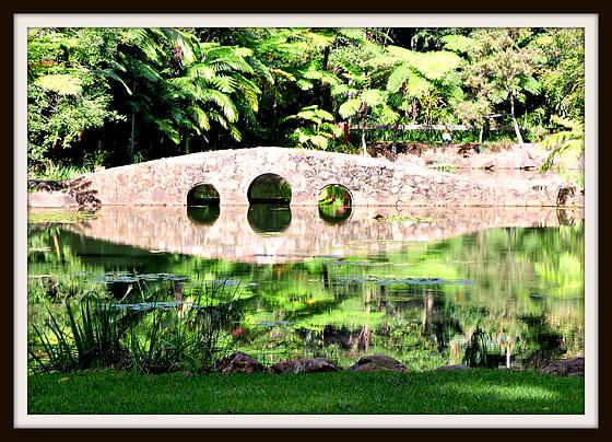 Tamborine Botanic Gardens