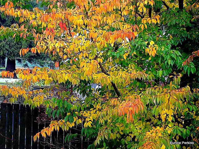Autumnal Leaves.