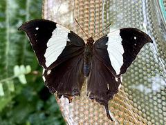 ? Im Schmetterlingshaus auf der Insel Mainau