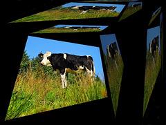 La vache qui rit aux éclats... [ON EXPLORE]