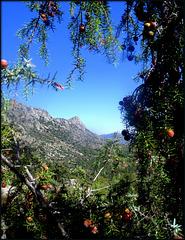 El Pico de La Miel framed by juniper