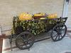 Cricova Winery- Cart with Large Pumpkins