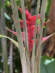 landscaping detail - the Royal Hawaiian