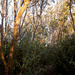 trees 01