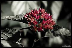 Noir et Rouge….