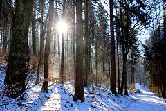 Winterimpression 21. Januar 2016