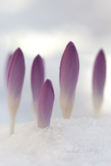 zarte Frühlingsspitzen