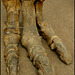 Iguanodon bernissartensis foot